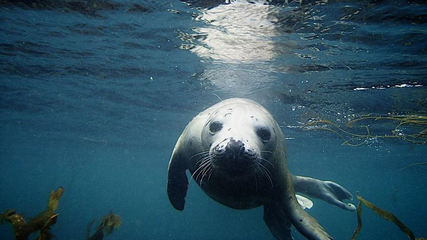 seal---Version-2