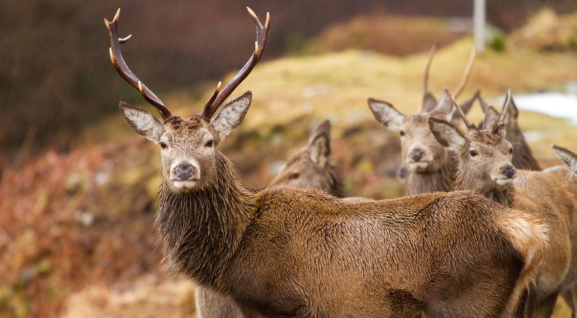 Deer Stalking Experience